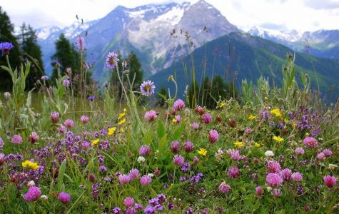 What type of wildflower are you?